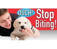 Best Make dog stop biting