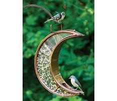 Best Make it yourself bird feeders