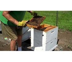 Best Making splits honey bee hives