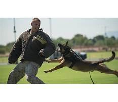 Best Marine corps dog training.aspx