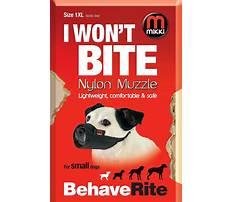 Best Mikki s dog training services ames ia