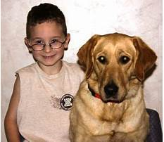 Best Military dog training tutorials.aspx