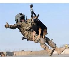 Best Military working dog training videos.aspx