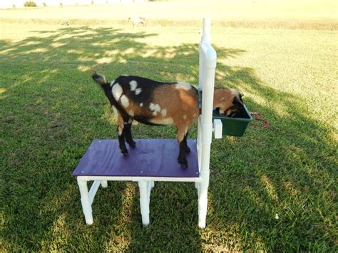 Milking Stand Plans For Nigerian Dwarf Goat