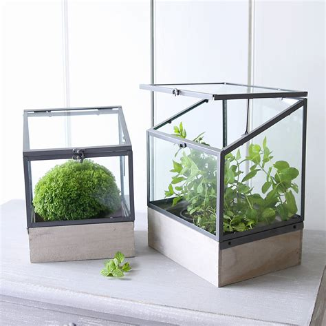 Mini Greenhouse Planter Boxes