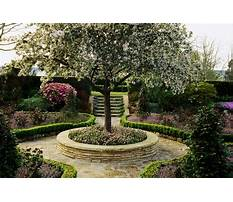 Best Miniature trees for small gardens