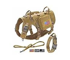 Best Most effective training for large dogs.aspx