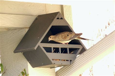 Mourning Dove Bird House Plans