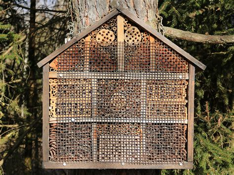 Native Bee House Plans