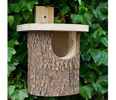 Best Natural bird house plans