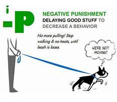 Best Negative punishment dog training
