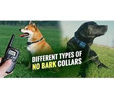 Best No barking dogs
