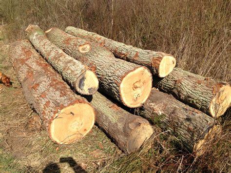 Oak-Tree-Woodworking