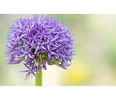 Best Online plants nursery
