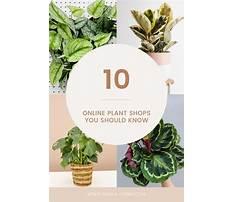 Best Online plants shopping