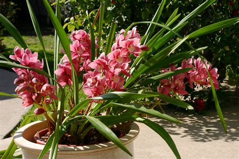 Orchid Care Outdoors