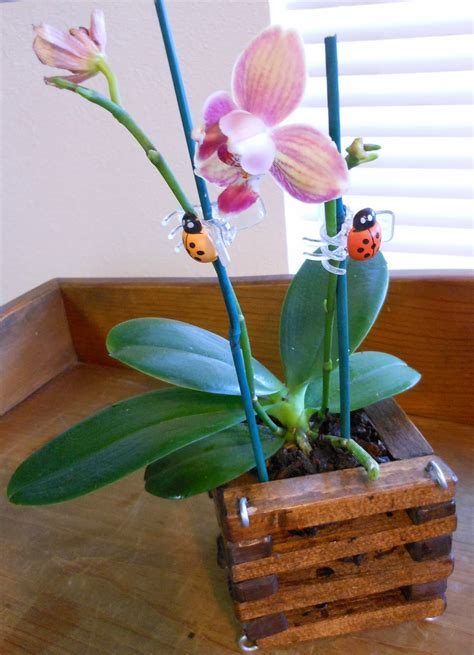 Orchid Planters Wood Diy Small