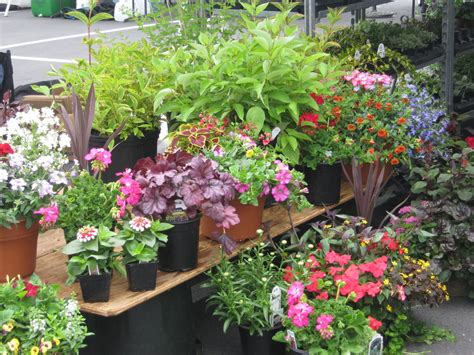 Outdoor Plants For Sale Online