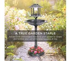 Best Outdoor bird house planter