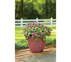 Best Outdoor planter ideas for spring