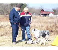 Best Pat muller dog training