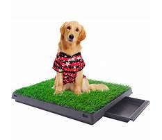 Best Patio potty training dogs.aspx