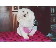 Best Paws off dog training.aspx
