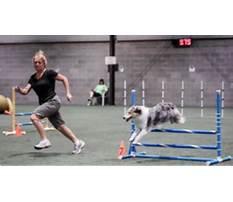 Best Pawsitive energy dog training.aspx