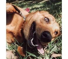 Best Pensicola dog training facility.aspx