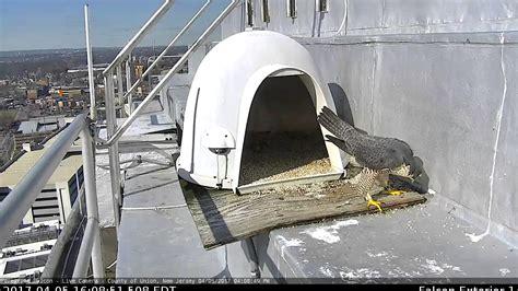 Peregrine-Falcon-Nest-Box-Plans