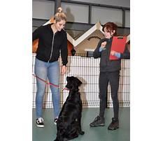 Best Pet dog training instructors