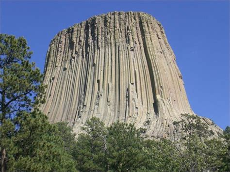 Petrified Wood Devils Tower