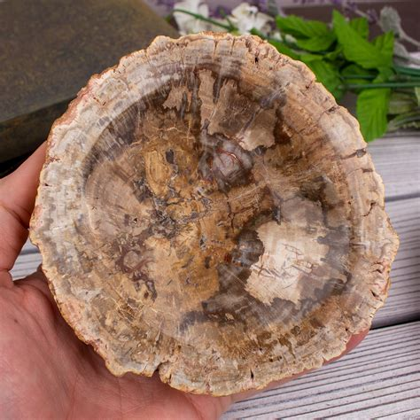 Petrified Wood Diy Small
