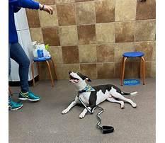 Best Petsmart dog training supplies.aspx