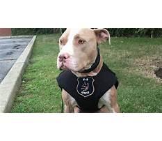 Best Pitbull dog training classes.aspx