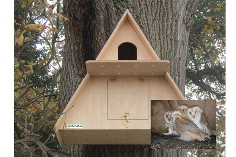Plans-For-A-Barn-Owl-Box