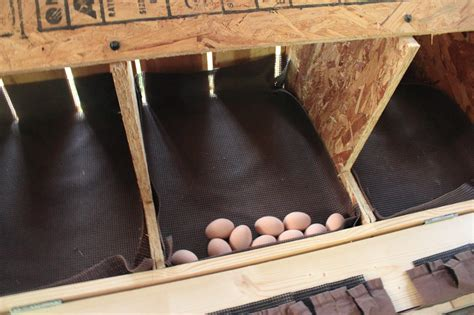 Plans-For-Chicken-Roll-Out-Nest-Box