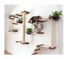 Best Plans for cat shelves