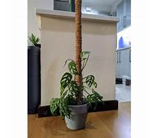 Best Plant support pole