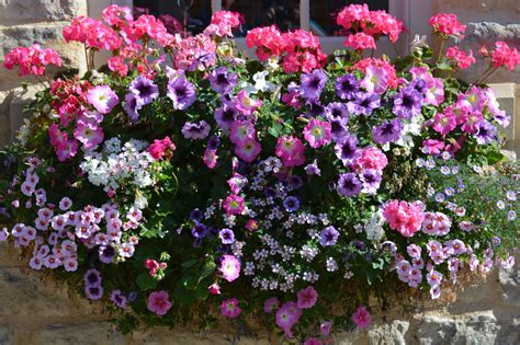 Plants For Hot Sunny Window Boxes