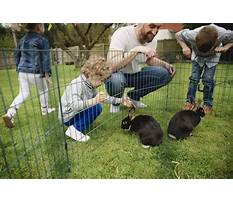 Best Playpens for bunnies in your house