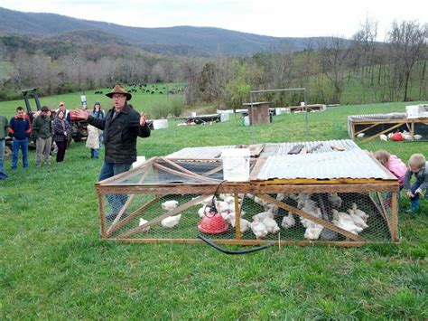 Poly Face Farm Chicken Tractor Plans Free
