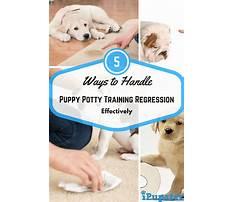 Best Potty training regression dog.aspx