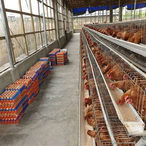 Poultry cages prices in kenya Image