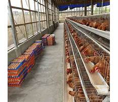 Best Poultry cages prices in kenya