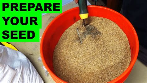 @ Preparing Grass Seed For Quick Germination.