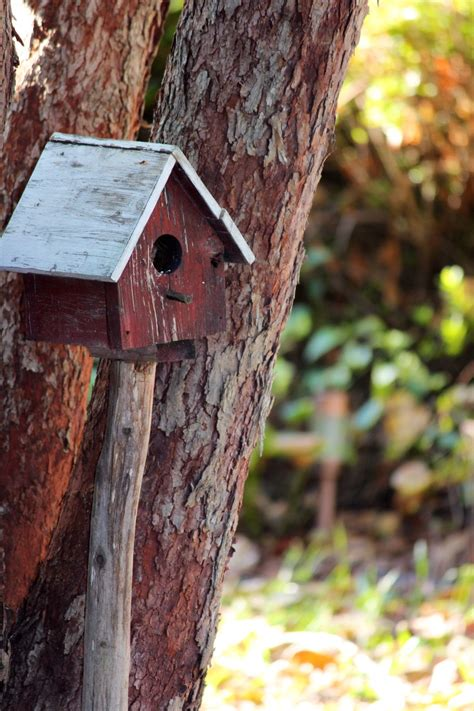 Pretty-Bird-House-Plans