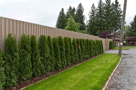 Privacy Fence Plants For Seattle