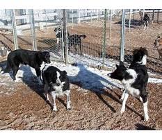 Best Progressive dog training greeley co