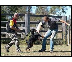 Best Protection dog training brisbane